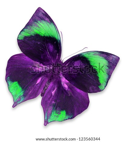 Purple Butterfly Flying Stock Photos Images Amp Pictures Shutterstock