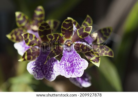 purple and green orchid cluster with selective focus - stock photo