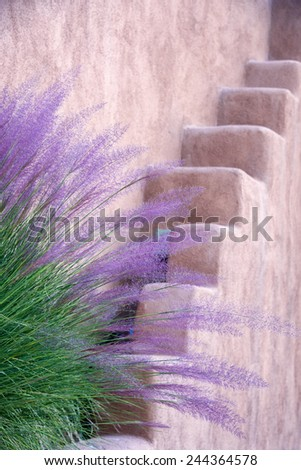 Purple and green tall grasses fronting an adobe wall in Santa Fe, NM - stock photo