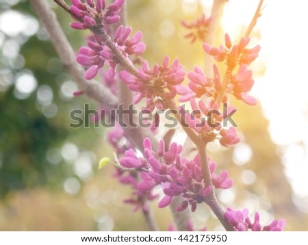 Purple and pink flower bud on brown branch in bright rays sunshine stand on golden meadow with bokeh green trees background. - stock photo