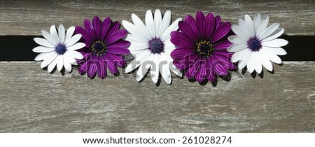 purple and white daisies on wood - stock photo
