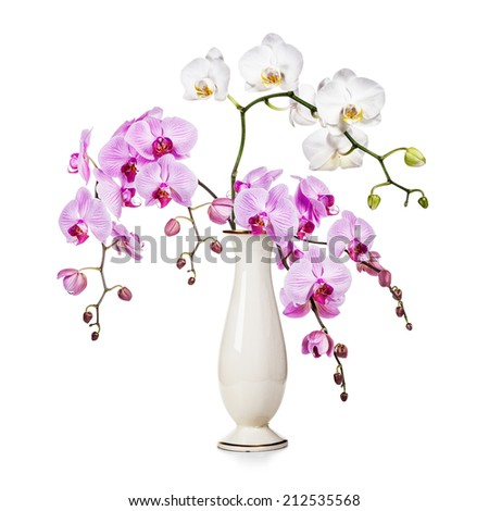 Purple and white orchid flowers in retro vase isolated on white background - stock photo