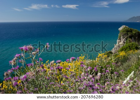 Purple and yellow flowers at the shore of the turquoise sea. Focus on the purple flowers - stock photo