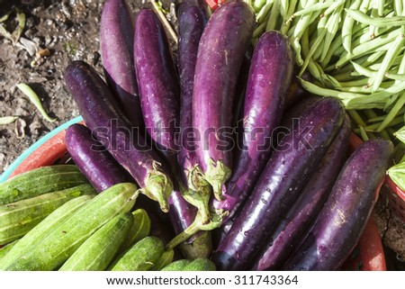Purple Aubergines, Solanum melongena or eggplants, between cucumbers and beans. At a market in Vietnam - stock photo