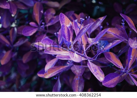 purple autumn leaves on a wall, background - stock photo
