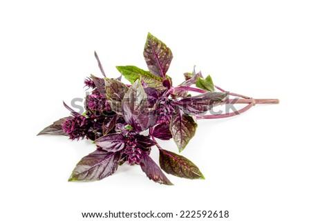 Purple basil isolated on white background. - stock photo