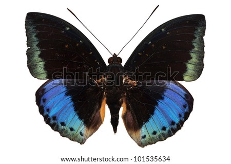 purple butterfly isolated on white background - stock photo