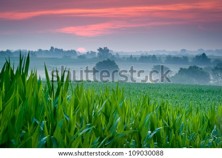 Purple clouds at sunrise over midwest corn field - stock photo