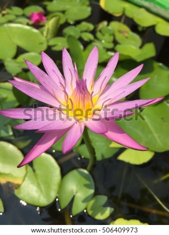 Colours of lotus flower image collections flower decoration ideas different colours of lotus flower images flower decoration ideas purple color lotus flower stock photo download mightylinksfo