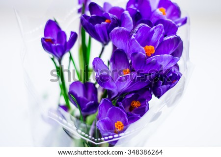 Purple crocus flowers against white background, close-up