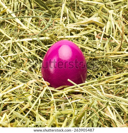 purple easter egg on a hay background