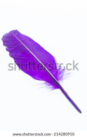 Purple feather close up - stock photo