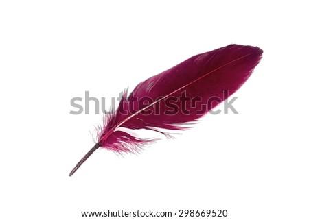 Purple feather on white background. - stock photo