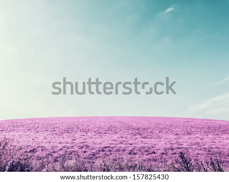 Purple field on sky, infrared effect - stock photo