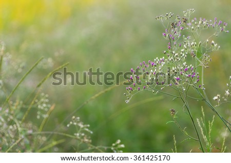 Purple fleabane in nature for a natural background.