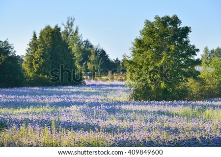 Purple flower field with trees - stock photo