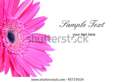 Purple flower gerbera isolated on white background - stock photo