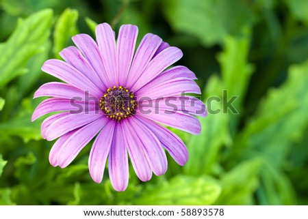 purple flower on a green background - stock photo