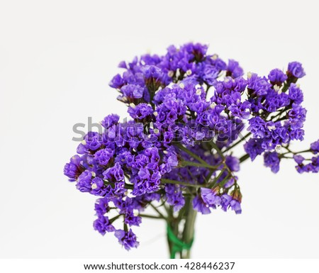 Purple flower plants for natural background,