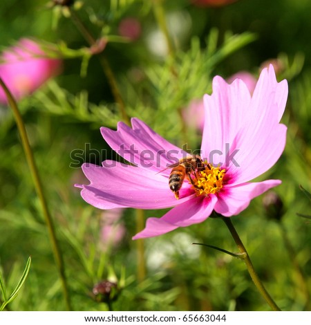 Purple flower with bee - stock photo