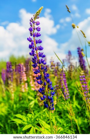 Purple flower with green leaves in summer day - stock photo