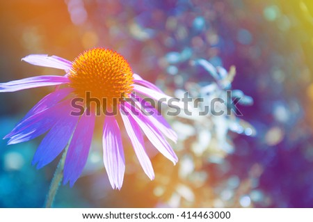 Purple flower with waterdrop on petals and pastel color gradient background - stock photo