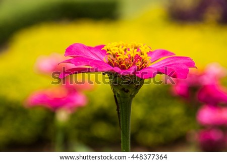 Purple flower with yellow background, middle of frame. - stock photo