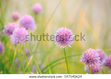 Purple flowers - stock photo