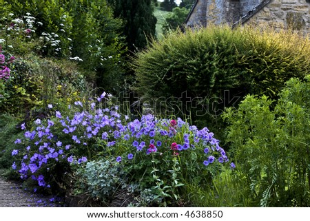 Purple flowers along the countryside of England with a cottage hidden behind - stock photo