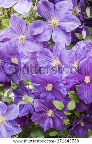 purple flowers as a background - stock photo