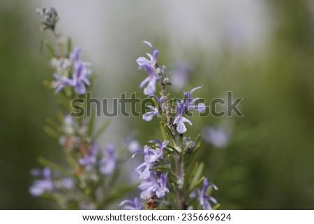 Purple flowers background - stock photo