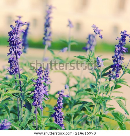 Purple flowers grass field with retro instagram filter effect - stock photo