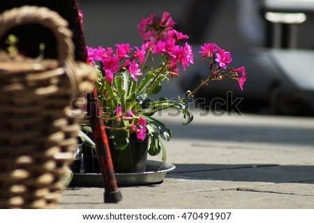 Purple flowers in focus in background sitting in a black plastic pot on a metallic dish on the concrete paved ground. Partial view. In the foreground is metallic leg and a brown reed basket blurred.