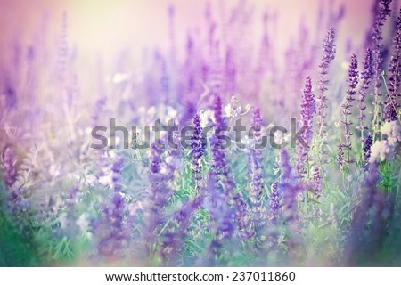 Purple flowers in meadow and white flowers - stock photo