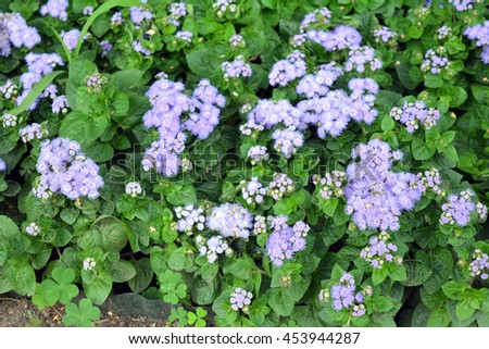 Purple flowers, natural background