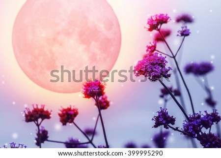 Purple flowers on full moon night, Elements of this image furnished by NASA - stock photo