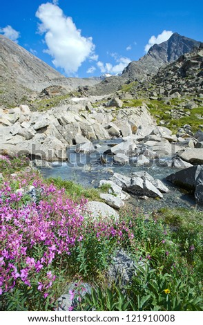 purple flowers on the bank of a mountain stream under blue cloudy sky - stock photo