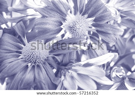 purple flowers texture - stock photo