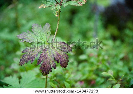 purple green leaf closeup nature background