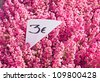 Purple heather at the  flower market with price in euro - stock photo