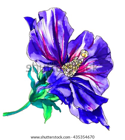 Purple hibiscus flower blossom. Hand drawn vibrant watercolor tropical plant isolated on white background. Botanical illustration for wedding printing products, card, invitation. Japanese style. - stock photo