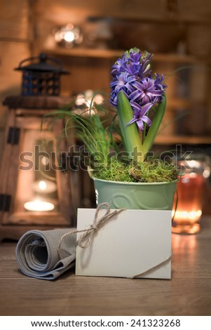 Purple hyacinth and greeting card on winter kitchen, text space - stock photo