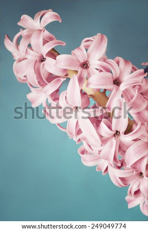 Purple hyacinth on blue background, filter and vignetting effect - stock photo