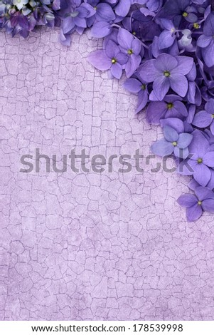 Purple Hydrangea blossomes over a craquelure background with room for copy space. - stock photo