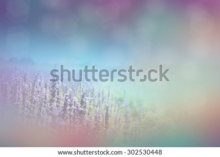 purple lavender flowers background - stock photo