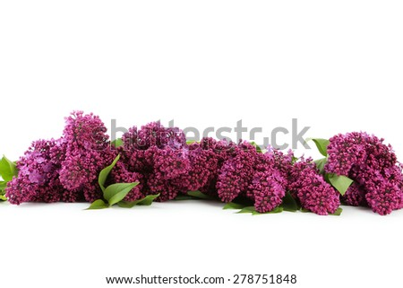 Purple lilac flowers isolated on white - stock photo