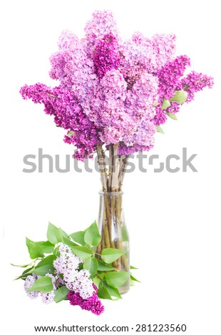 Purple Lilac fresh  flowers in vase  isolated on white background