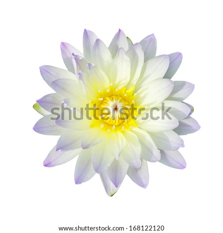 Purple lotus flower isolated, with clipping path. - stock photo