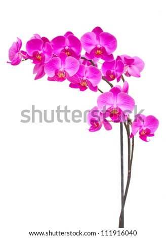 purple  orchid branch isolated on white background - stock photo