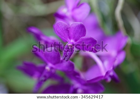 purple orchid close up in nature